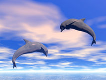 Dolphins Stock Photos