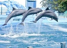 Free Dolphins Stock Photo - 37762190