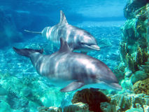Dolphins. At a park Stock Photo