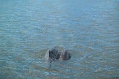 Free Dolphins Stock Photo - 68895590