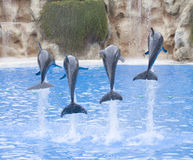 Dolphins. Show in a zoo Royalty Free Stock Images