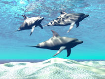 Dolphins. Three dolphins swim over a sandy reef Stock Images
