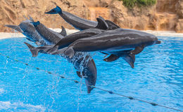 Dolphins in the Air Stock Photography