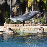 Dolphins in air Royalty Free Stock Photo