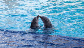 Dolphins in Aquarium Cancun Royalty Free Stock Photography