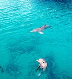 Dolphins bahamas Royalty Free Stock Photography