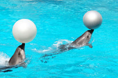 Dolphins With Balls Stock Images