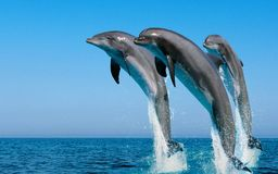 Dolphins. Beckon us into this beautiful underwater world Stock Images