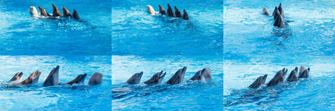 Dolphins and Beluga dancing Lambada stock photos