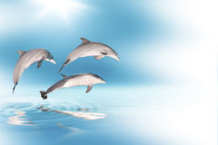Dolphins and blue sky Stock Photos