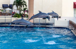 Dolphins in Cancun Aquarium Mexico Royalty Free Stock Photography