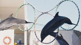 Dolphins jump thru the circles Slow motion video stock video footage