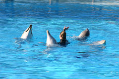Dolphins dancing Stock Photos
