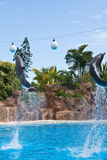 Dolphins doing a show in the swimming pool Stock Photos