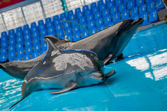 Dolphins Stock Images