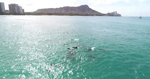 Drone footage, Dolphins in open water at Honolulu, Hawaii, in deep blue water _