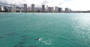 Flying POV, Dolphins in open water at Hawaii, in crystal clear water _
