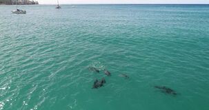 Aerial view, Dolphins in open water at Hawaii, in blue water _