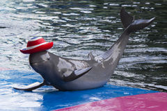Dolphins in a dolphinarium Royalty Free Stock Image
