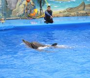 Dolphins in dolphinarium stock image