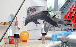 Dolphins in dolphinarium Stock Photos