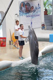 Dolphins in dolphinarium. Varna, Bulgaria stock images