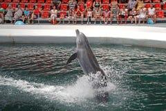 Dolphins in dolphinarium. Varna, Bulgaria royalty free stock photography