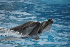 Dolphins double Stock Images