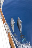 Dolphins escort yacht. A group of dolphins escort a yacht Stock Images