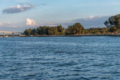 Dolphins family in Clearwater. Sunset time. Dolphins family in Clearwater. Sunset time stock image