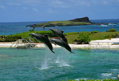 Dolphins In Flight Stock Photography