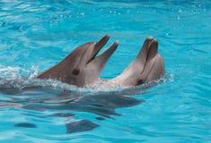 Dolphins flirting royalty free stock photos