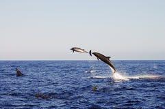 Dolphins - Galapagos - Ecuador stock photos