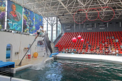 Dolphins In Dolphinarium Stock Images