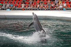 Dolphins In Dolphinarium Royalty Free Stock Photography
