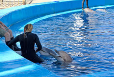 Dolphins Interacting With Their Trainers Stock Photography