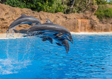 Dolphins Jump Royalty Free Stock Photography