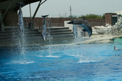 Dolphins jump Royalty Free Stock Images