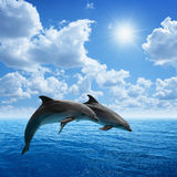 Dolphins jumping. Couple jumping dolphins, blue sea and sky, white clouds, bright sun Royalty Free Stock Photo