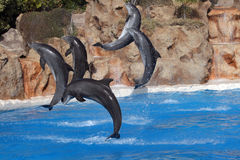 Dolphins Jumping In The Air Stock Images