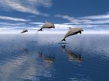 Dolphins jumping out of water. Surface of water is very smooth and shows reflection of dolphins on surface Royalty Free Stock Photography