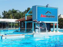 Dolphins Jumping. Rome, Italy - September 2016: Three dolphins jumping and playing at zoomarine aquarium Royalty Free Stock Photos