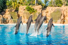 Dolphins jumping spectaculary high at aquarium show. royalty free stock photos