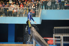 Performing Dolphin with trainer Stock Photo