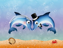 Dolphins in love Royalty Free Stock Photography