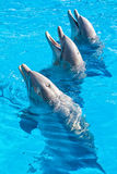 Dolphins at the Miami Seaquarium Stock Photo
