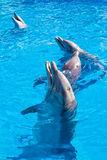 Dolphins at the Miami Seaquarium Stock Photos