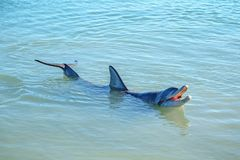 Dolphins at monkey mia, sharkes bay, western australia 31. Dolphins in the ocean at monkey mia, sharkes bay, western australia stock photo
