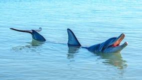 Dolphins at monkey mia, sharkes bay, western australia 49. Dolphins in the ocean at monkey mia, sharkes bay, western australia royalty free stock photo