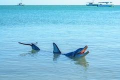 Dolphins at monkey mia, sharkes bay, western australia 50. Dolphins in the ocean at monkey mia, sharkes bay, western australia royalty free stock photos